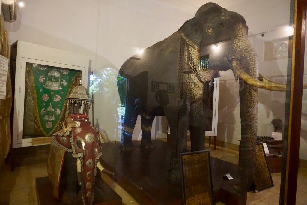 Kandy tempel elefant