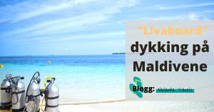 liveaboard dykking Maldiene