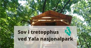 tretopphus ved Yala