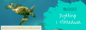 Dykking i Hikkaduwa blogg
