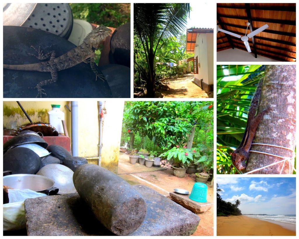 Flytte til Sri Lanka Hverdagsliv
