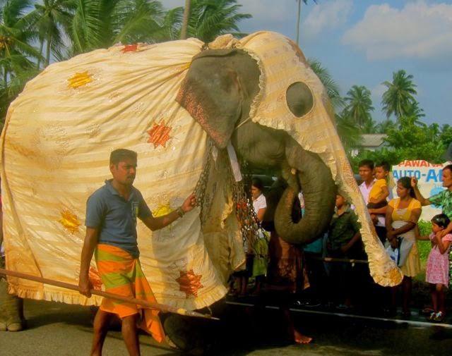 Perahera elefant Sri Lanka