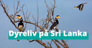 Sri Lankas unike dyreliv