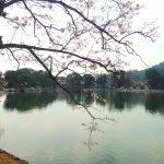 Innsjøen i Kandy tempelet bak