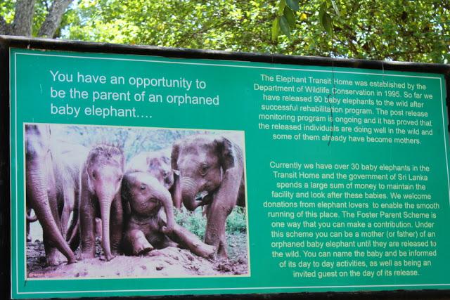 Elephant Transit Home Udawalwe