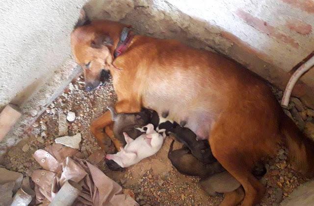 Bygge Hotell på Sri Lanka Hunder