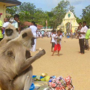 Kataragama Temple monkey
