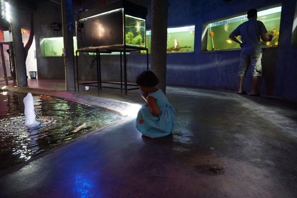 """Besøk gjerne parken """"Viharamahadevi"""", hvor de både har lekeplass, benker i skyggen av trærne og et lite akvarium."""