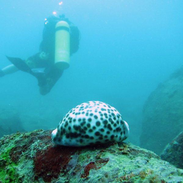 Diving Hikkaduwa Dykking