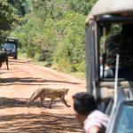 Safari Yala Leopard