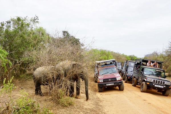 gruppereise sri lanak juli elefanter i yala