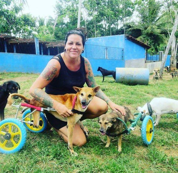 Frivillig arbeid på Sri Lanka løshunder gatehunder