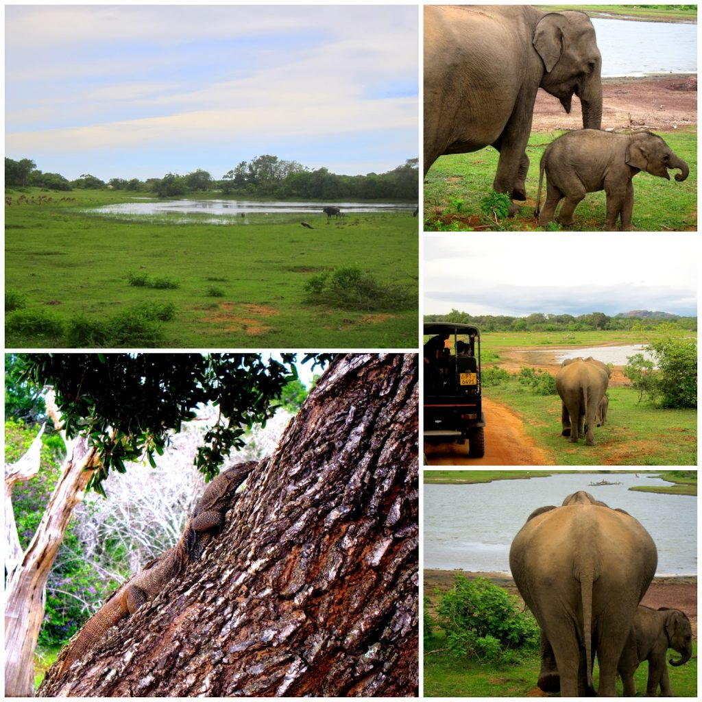 tretopphus ved Yala nasjonalpark