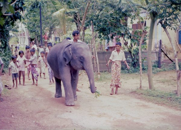 Elefant Hikkaduwa på 70 tallet