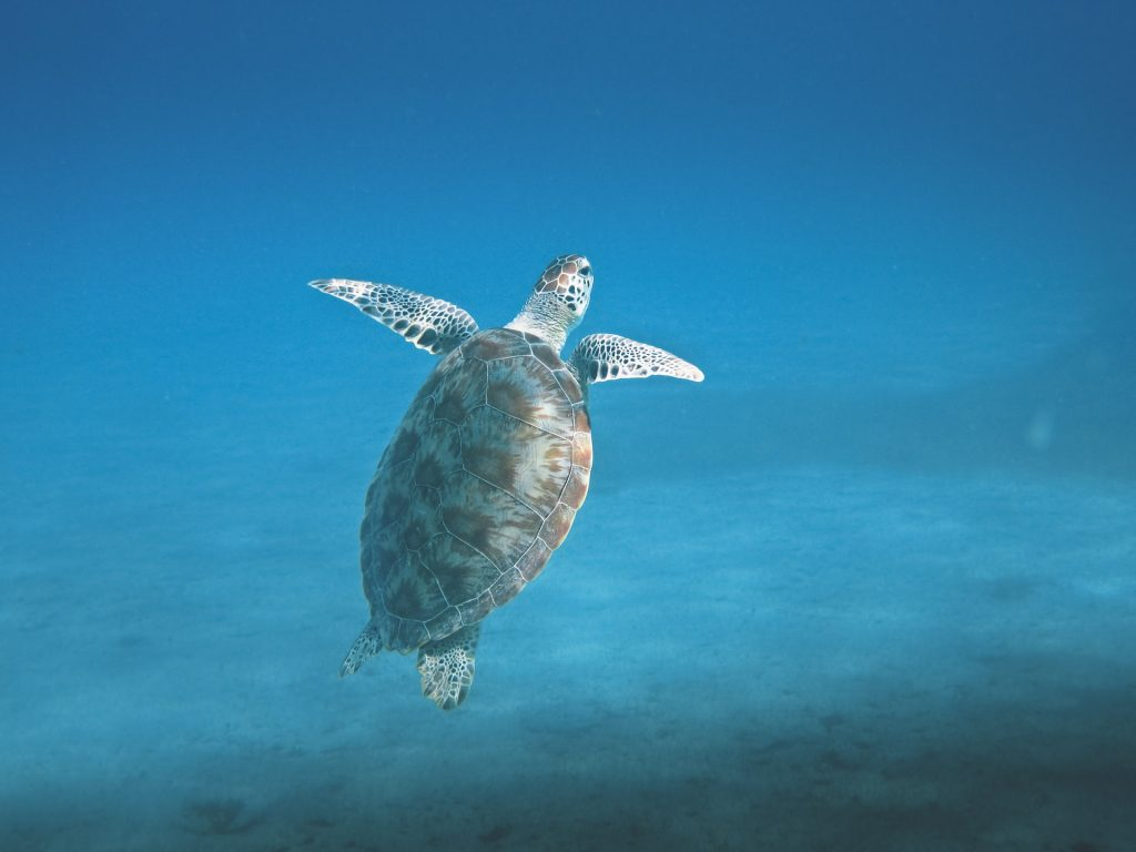 Skilpadde dykking Hikkaduwa