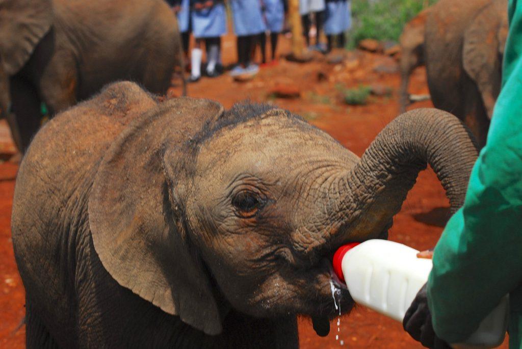 frivillig arbeid på Sri Lanka elefanter