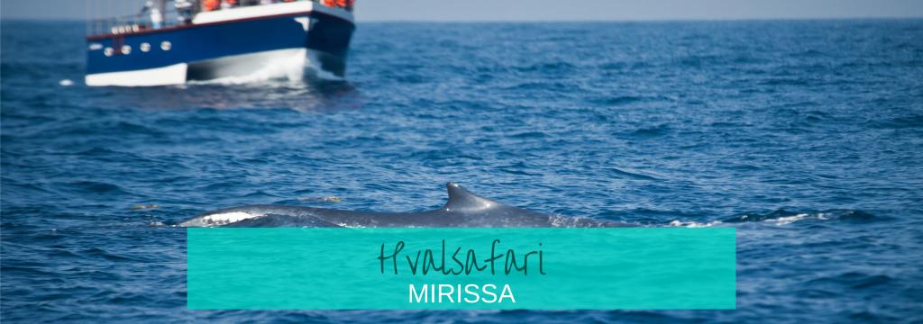 Hvalsafari Mirissa