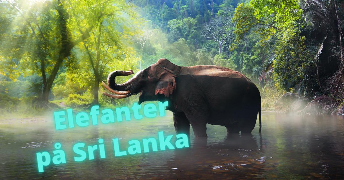 Elefanter Sri Lanka